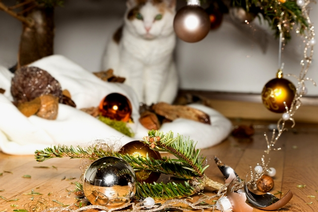 Unruly pets How to Keep Your Home Safe during the Christmas Holiday
