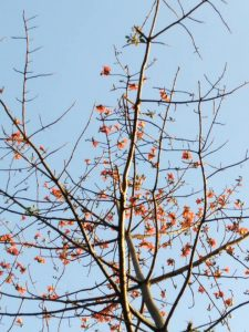 Malabulak 15 Native Trees That Will Give Your Home a Filipino Touch
