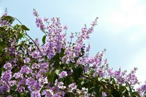 Banaba 15 Trees That Will Give Your Home a Filipino Touch
