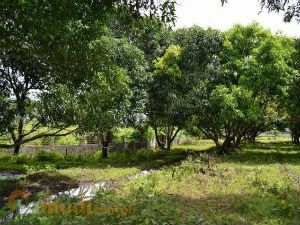 Farm Lot for Sale in Batangas - Buy Land | Lamudi
