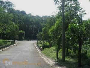 496 Square Meter Lot with View