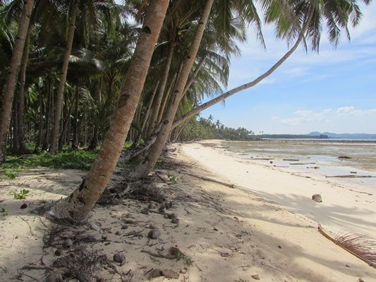 Siargao Island Beach Front Property Pefect Place To