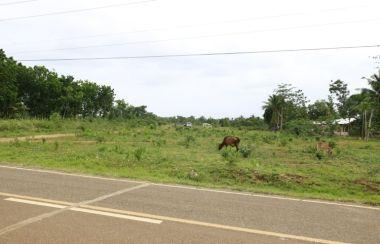 Lot For Sale in Bohol - Buy Land | Lamudi