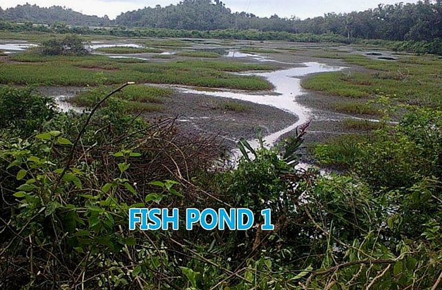Five foreclosed properties worthy of your investment money for Koi pond quezon city